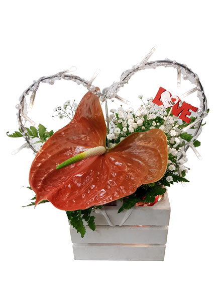 Anthurium Love