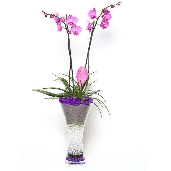 Florister as bilbao gandarias - Maceta para orquideas ...